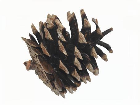 Pine cone 01