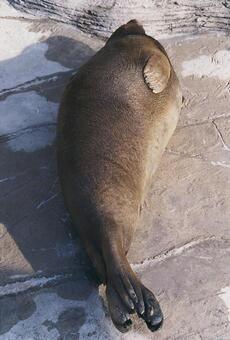 Seal [seal] - 005
