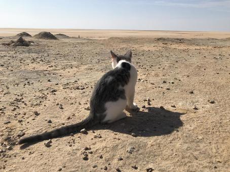 Cat living in the desert