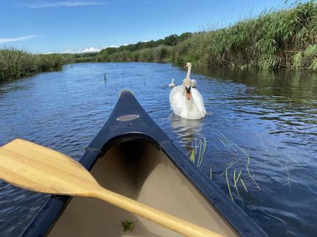 카누와 백조