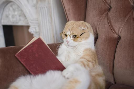 독서를하는 고양이