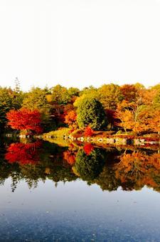 Fall scenery 25