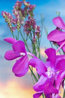 Blue-purple mokara and statice