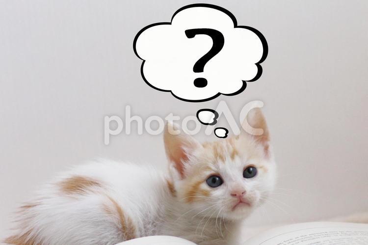 ふきだし子猫の写真
