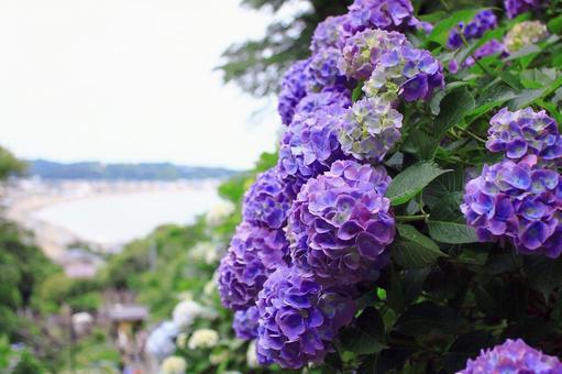 Hydrangea and the sea
