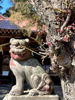 Komainu behind the plum bud