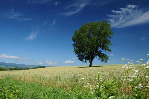 Tree of philosophy