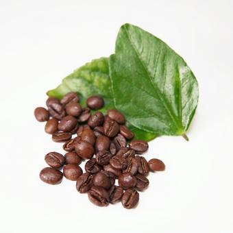 커피 원두 커피 (잎 세트)