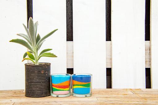 Fashionable interior succulents