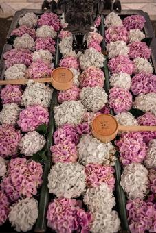 Pink and white flower chozuya
