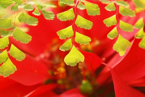 Image of red and green
