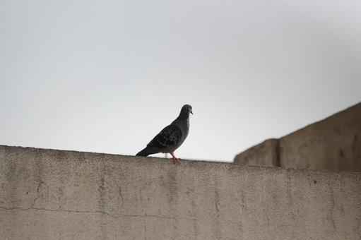 Pakistan Bird 18