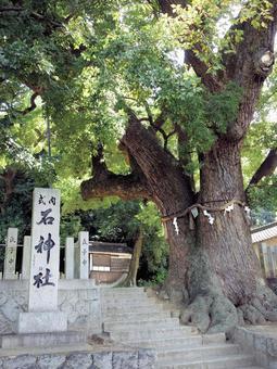 [Giant tree pilgrimage] Stone shrine