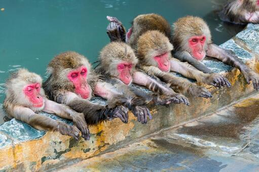Monkey and hot spring 4