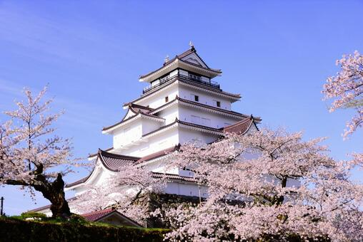 Tsuruga castle in spring