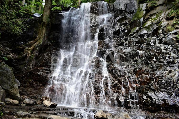 母の白滝の写真