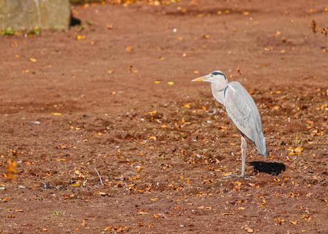 Somehow lonesome bird