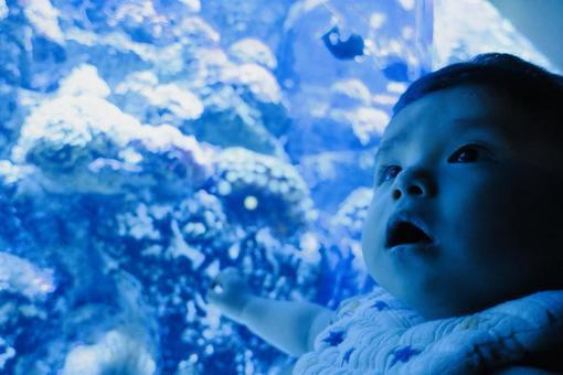 Baby aquarium