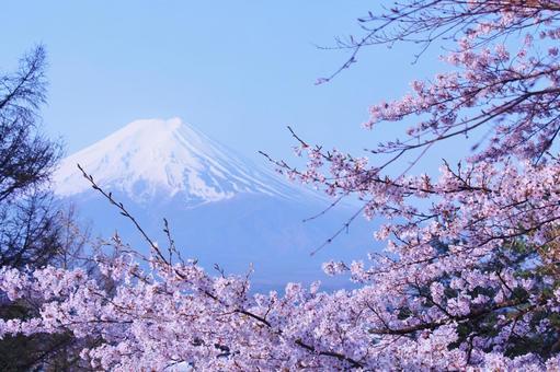 Fuji and cherry blossoms 6