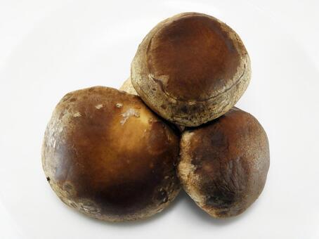 생 표고 버섯 (3 개)