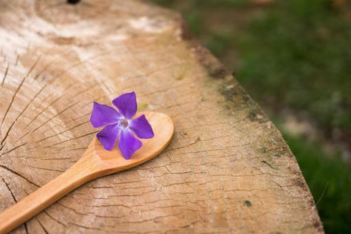 一个车轮紫色的花