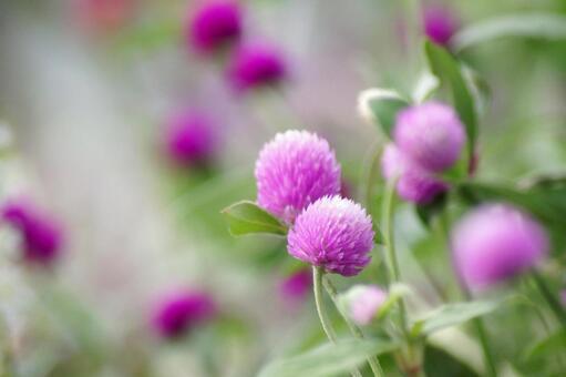 Summer flower -27