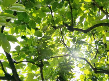 초여름 햇살 # 3