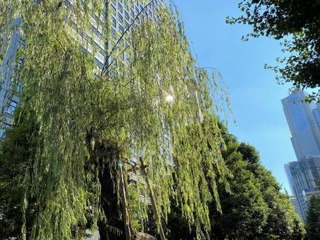 상업 지역 중의 시원한 버드 나무