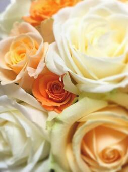 Rose gradation