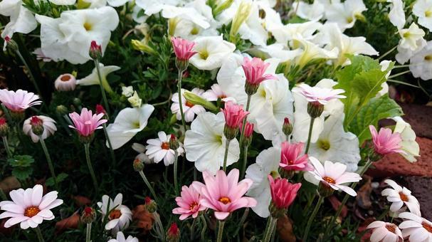 봄의 정원의 꽃
