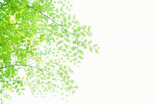 新鮮的綠色17
