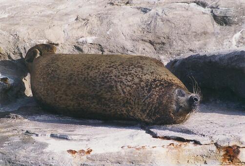 Seal [seal] - 007
