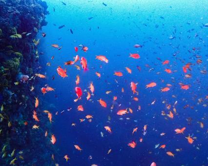 Underwater photography (flock)
