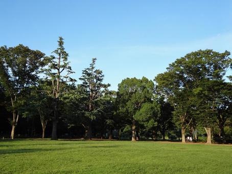 Yoyogi park 19