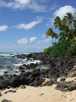바다 하얀 모래 바위 파도 야자수 하와이