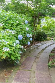 The approach to Myohoshoji Temple where the blue-purple hydrangea of the Mamenbara Plateau blooms