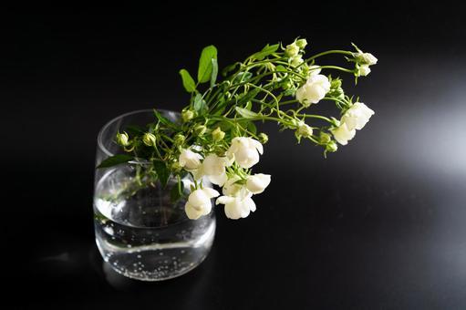 검은 배경으로 촬영 된 꽃병에 꽂 흰 장미 꽃다발