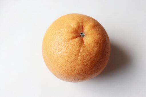 오렌지 자몽