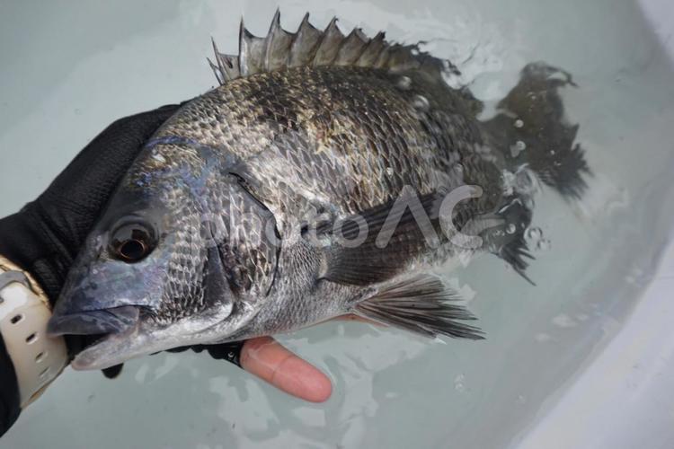 魚3の写真