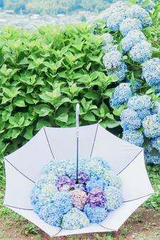 Umbrella with hydrangea ④