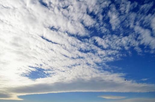 비늘 구름 하늘