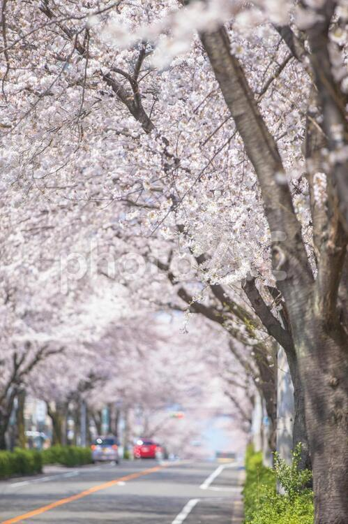 幻想的な花157の写真