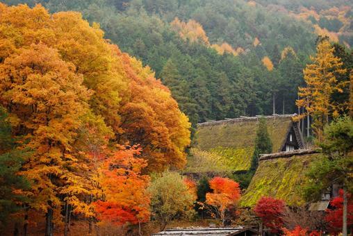 飛Tak高山的秋葉