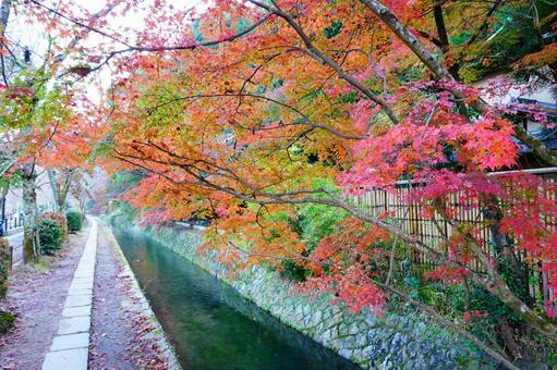 Autumn Kyoto Philosophy Road Scenery