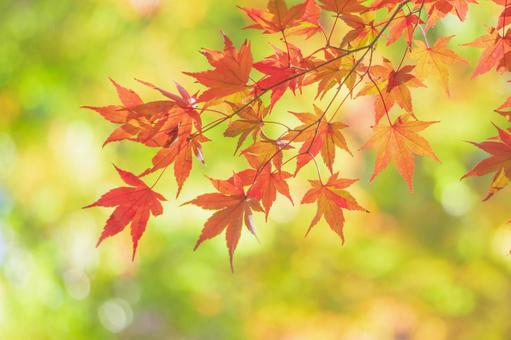 Autumn leaves and green gradient background