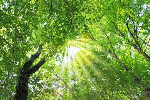 Meditation forest
