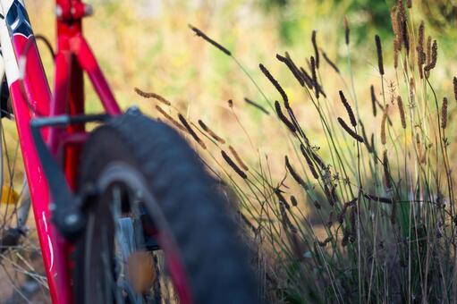 自行车轮胎5