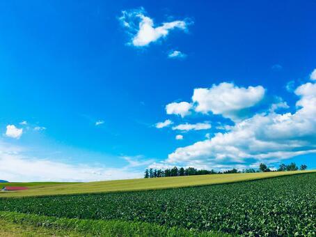 비 에이의 여름의 하늘