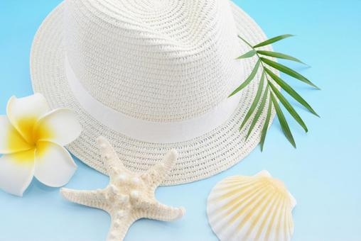 White hat seashell