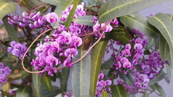 보라색의 꽃 (하든 벨 기어?)